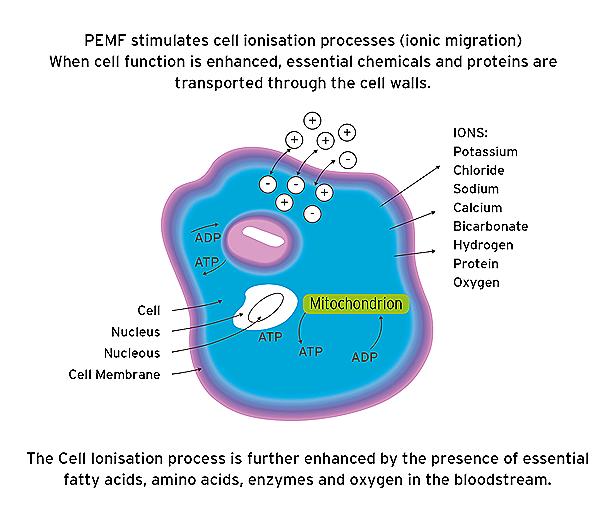 PEMF cell2
