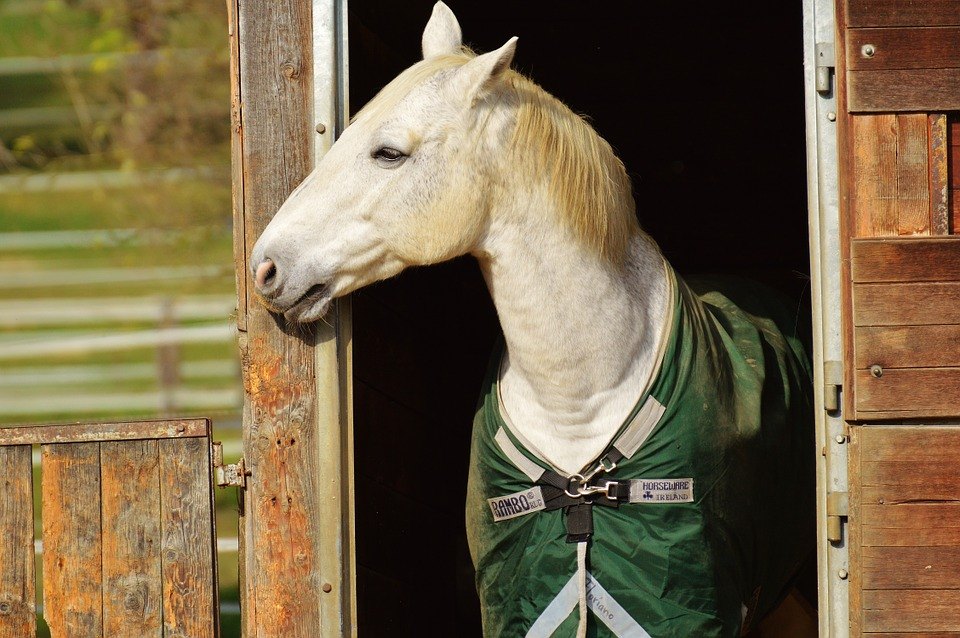 PEMF Devices For Horses Accelerate Healing Time